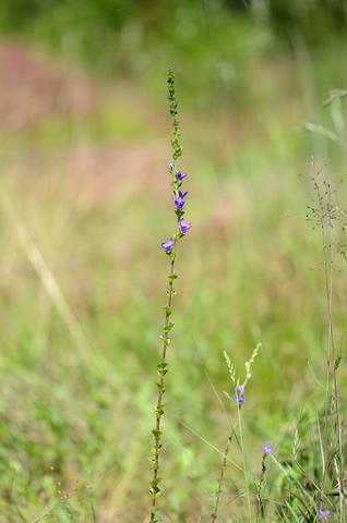 Image http://bioimages.vanderbilt.edu/lq/thomas/w0615-02-01.jpg