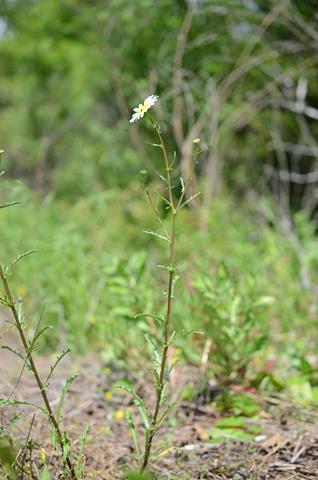 Image http://bioimages.vanderbilt.edu/lq/thomas/w0620-01-06.jpg