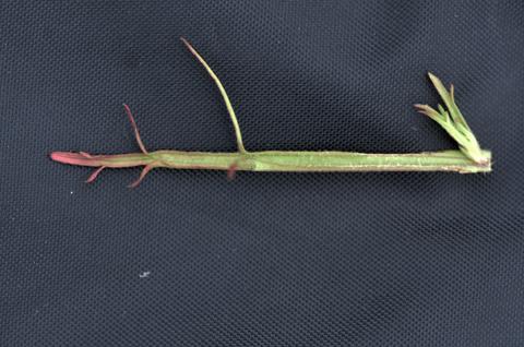 Image http://bioimages.vanderbilt.edu/lq/thomas/w0624-01-11.jpg