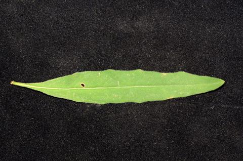 Image http://bioimages.vanderbilt.edu/lq/thomas/w0649-01-10.jpg