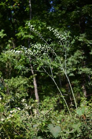 Image http://bioimages.vanderbilt.edu/lq/thomas/w0651-01-01.jpg