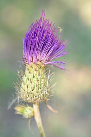 Image http://bioimages.vanderbilt.edu/lq/thomas/w0654-01-04.jpg