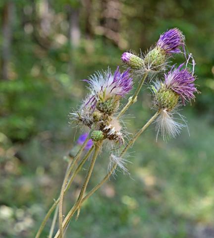 Image http://bioimages.vanderbilt.edu/lq/thomas/w0654-01-14.jpg
