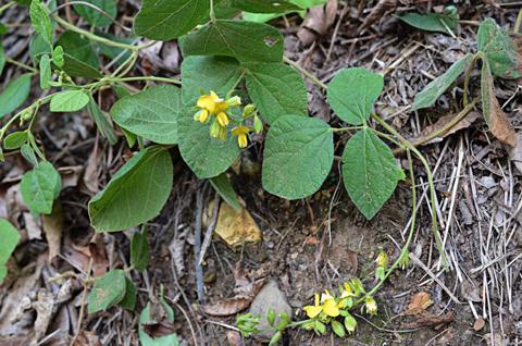 Image http://bioimages.vanderbilt.edu/lq/thomas/w0665-01-05.jpg