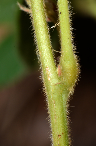 Image http://bioimages.vanderbilt.edu/lq/thomas/w0665-01-09.jpg
