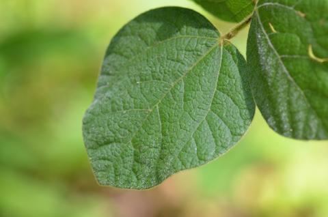 Image http://bioimages.vanderbilt.edu/lq/thomas/w0665-01-10.jpg