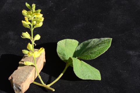 Image http://bioimages.vanderbilt.edu/lq/thomas/w0665-01-12.jpg