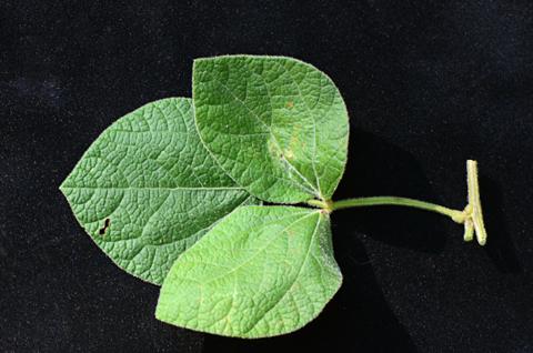Image http://bioimages.vanderbilt.edu/lq/thomas/w0665-01-13.jpg