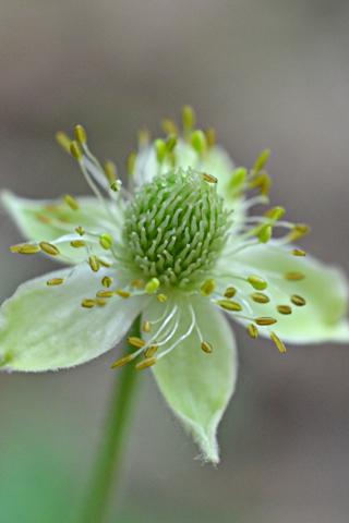 Image http://bioimages.vanderbilt.edu/lq/thomas/w0666-01-03.jpg