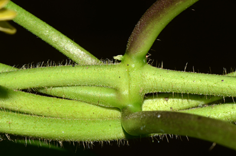 Image http://bioimages.vanderbilt.edu/lq/thomas/w0667-01-12.jpg