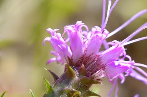 Image http://bioimages.vanderbilt.edu/lq/thomas/w0670-01-06.jpg