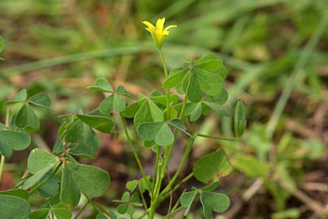 Image http://bioimages.vanderbilt.edu/lq/thomas/w0673-01-03.jpg