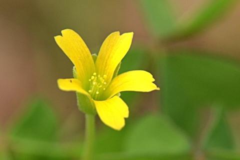 Image http://bioimages.vanderbilt.edu/lq/thomas/w0673-01-04.jpg