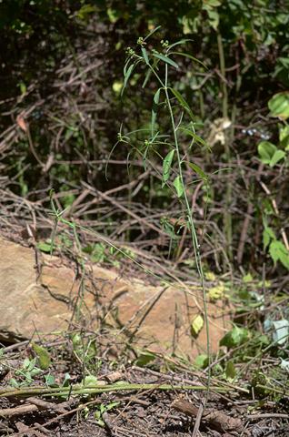 Image http://bioimages.vanderbilt.edu/lq/thomas/w0675-01-01.jpg