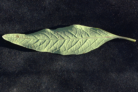 Image http://bioimages.vanderbilt.edu/lq/thomas/w0675-01-11.jpg