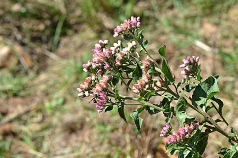 Image http://bioimages.vanderbilt.edu/lq/thomas/w0678-01-03.jpg