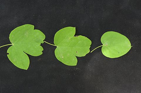 Image http://bioimages.vanderbilt.edu/lq/thomas/w0691-01-06.jpg