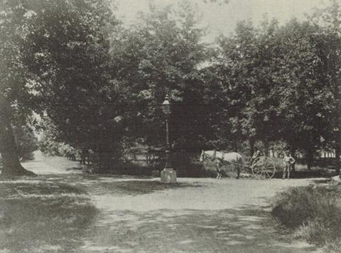 Image http://bioimages.vanderbilt.edu/lq/vanderbilt/wmcgaw-p139-garland-oak-rake.jpg