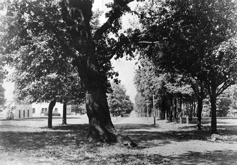 Garland Oak