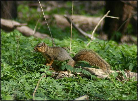 Image http://bioimages.vanderbilt.edu/lq/vannimwegenr/wscinigfosqrv255.jpg