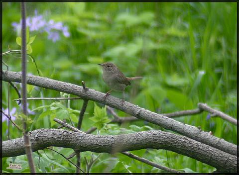 Image http://bioimages.vanderbilt.edu/lq/vannimwegenr/wtroaedhowrrv243.jpg