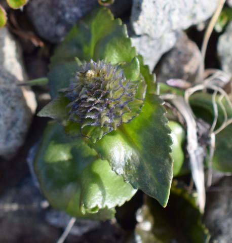 Image http://bioimages.vanderbilt.edu/lq/woodbridge/w8305-0109-01.JPG