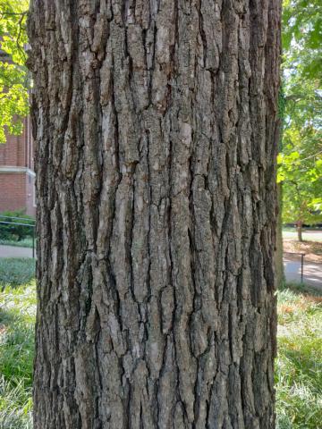 Image http://bioimages.vanderbilt.edu/lq/youngr/w20190918_151656.jpg