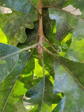 Image http://bioimages.vanderbilt.edu/lq/youngr/w20190918_151845.jpg