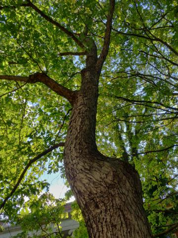 Image http://bioimages.vanderbilt.edu/lq/youngr/w20190918_160234.jpg
