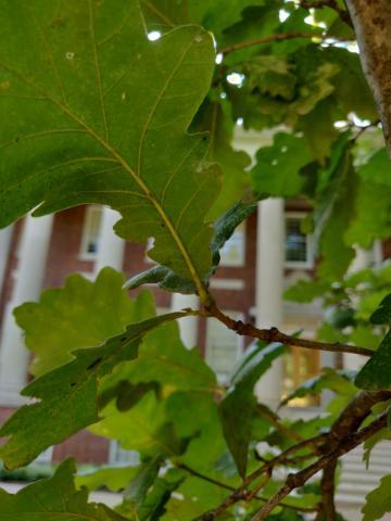 Image http://bioimages.vanderbilt.edu/lq/youngr/w20190918_160603.jpg