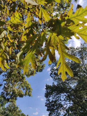 Image http://bioimages.vanderbilt.edu/lq/youngr/w20190918_161213.jpg