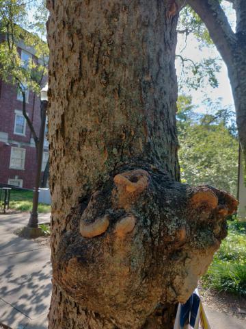 Image http://bioimages.vanderbilt.edu/lq/youngr/w20190918_161342.jpg