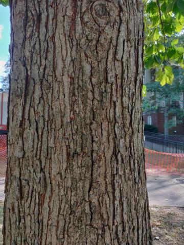 Image http://bioimages.vanderbilt.edu/lq/youngr/w20190918_161434.jpg